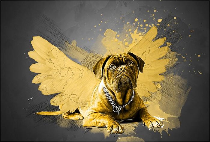 lo que enseñan los perros