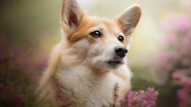 enseñanza espiritual canina