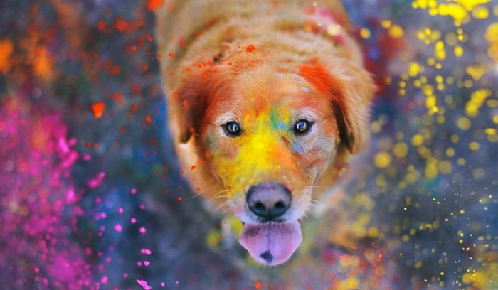 10 Enseñanzas espirituales que te muestra tu perro
