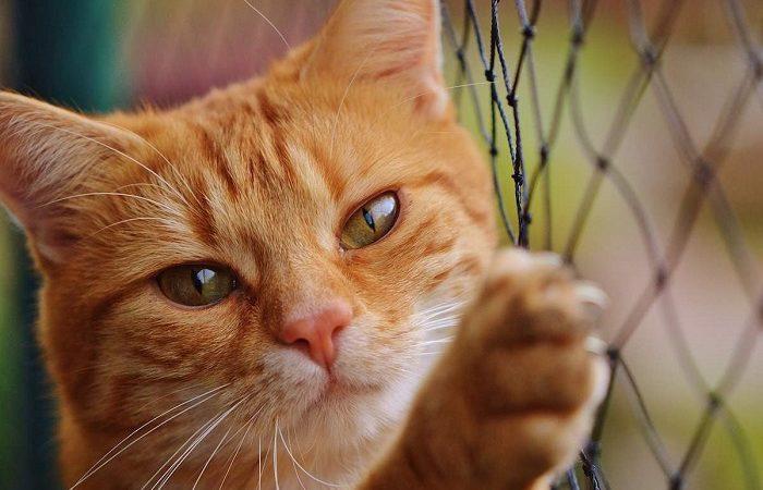 Adopta un gato y prolonga tu vida: Los beneficios son maravillosos