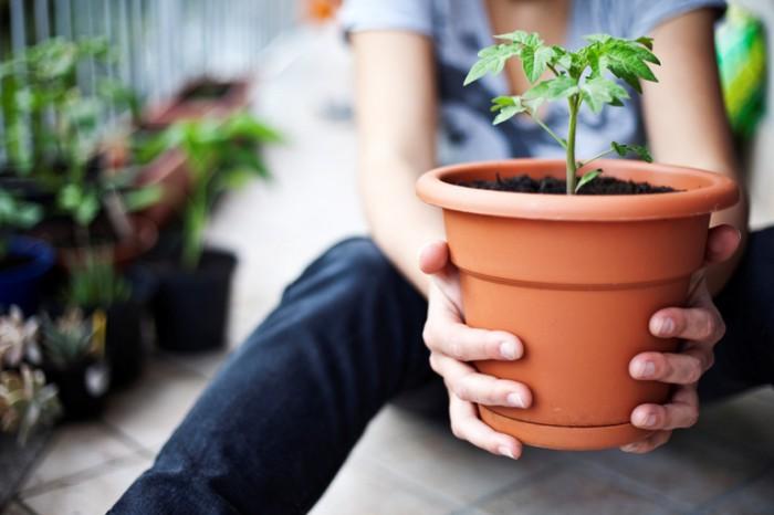 Cultiva un huerto en casa y convierte tu confinamiento en terapia para el alma