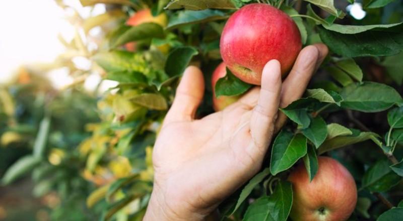 El árbol de manzanas: una conmovedora historia que te hará reflexionar