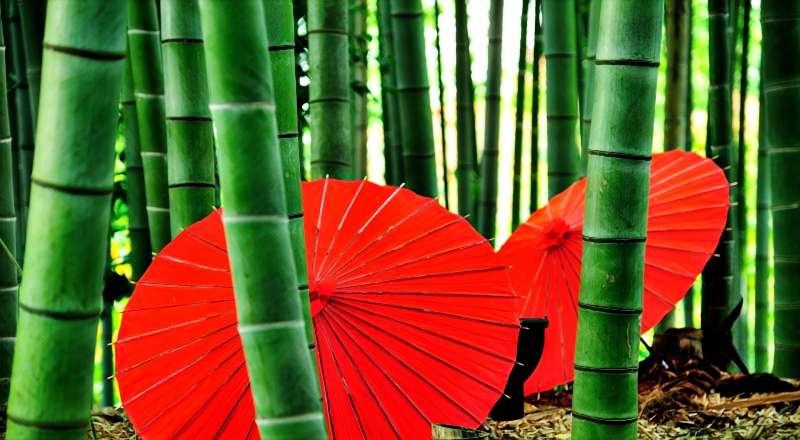 El bambú japonés: una historia sobre la paciencia y el esfuerzo diario