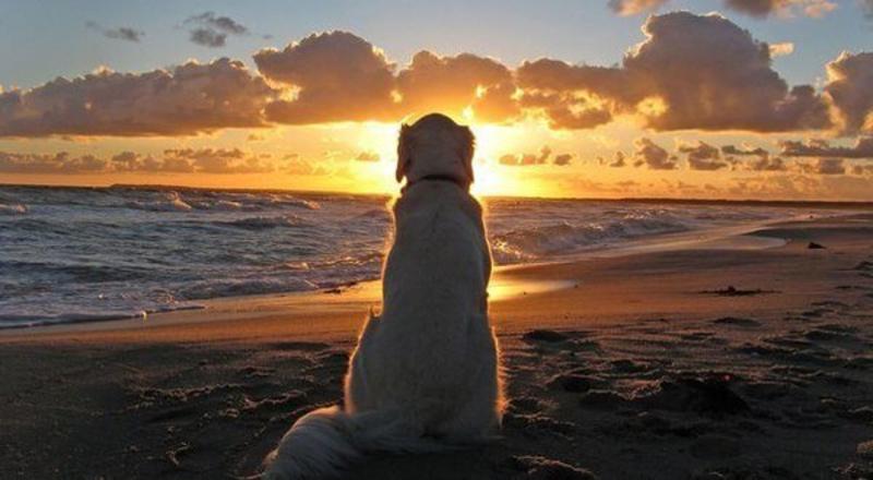 Un perrito en la playa