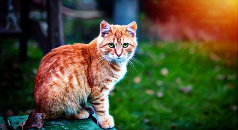 Cómo afrontar el dolor de perder una mascota